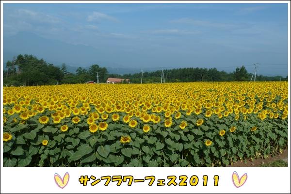 2011817-1_20110819195910.jpg