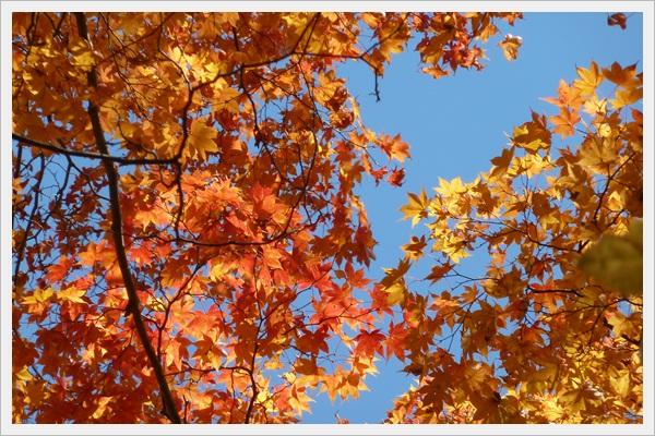 2012114-9_20121117221017.jpg