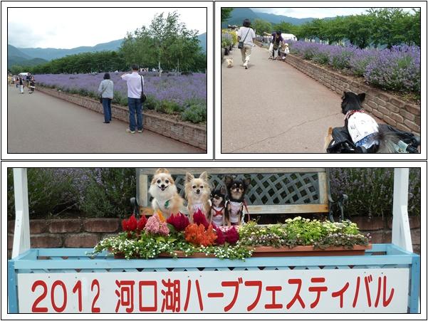 2012715-2.jpg