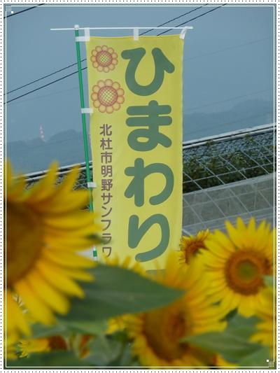 2012811-5.jpg