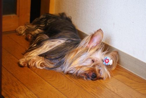 b小太郎眠り寸前