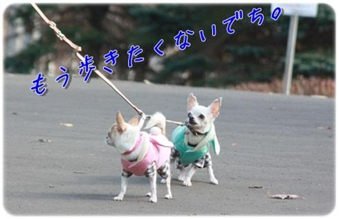 028_20111116200839.jpg