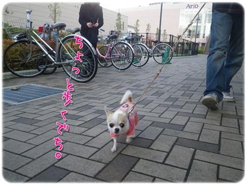 028_20111121204552.jpg