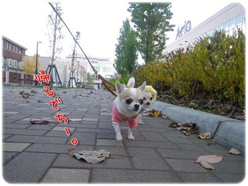 035_20111121204719.jpg