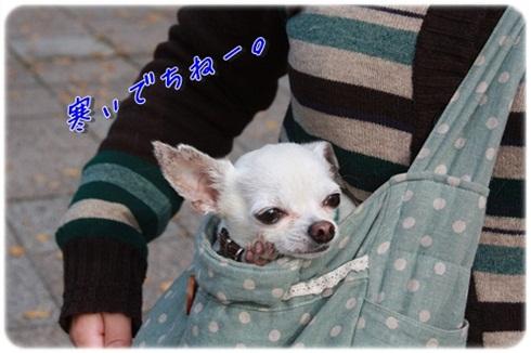 060_20111116200949.jpg