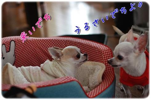 123_20111201201906.jpg