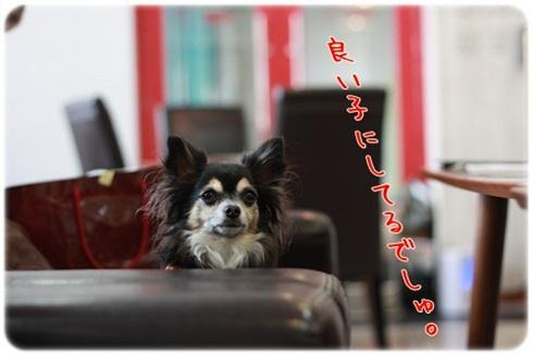 171_20111012204143.jpg