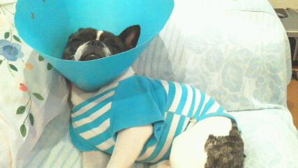 ソファ-は自分のベッドだと勘違いしている(汗)