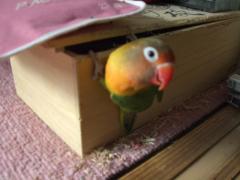 木箱発見⑤