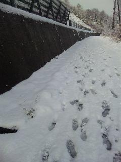 201011雪