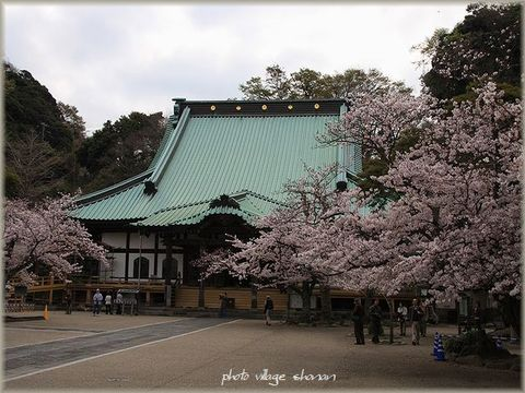 桜 光明寺 014-2