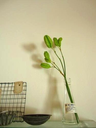 紫陽花は4