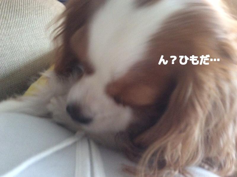 20141025234506e9f.jpg
