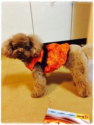 アリアちゃんかぼちゃワンピ(余西さん)