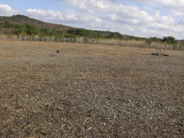 2010.11レジーナの森 212