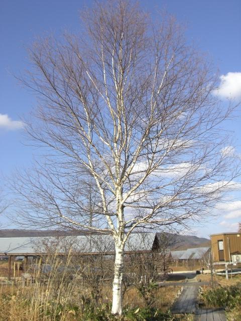 2010.11レジーナの森 261