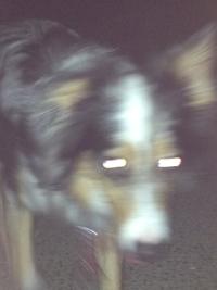 2012夜の犬