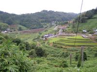 上山神社から棚田