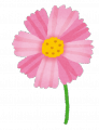 flower_cosmos[1]
