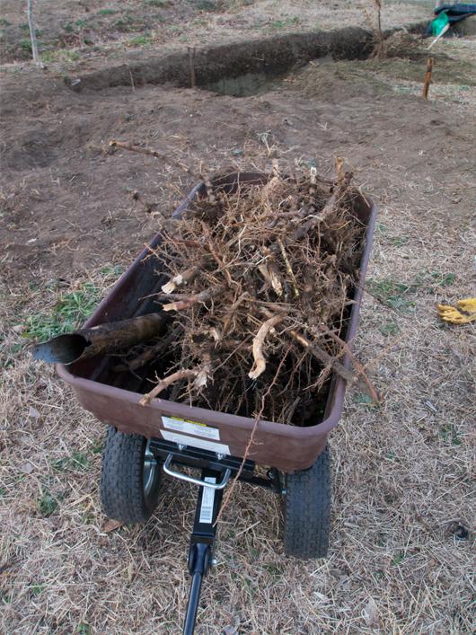 竹根切り2_8