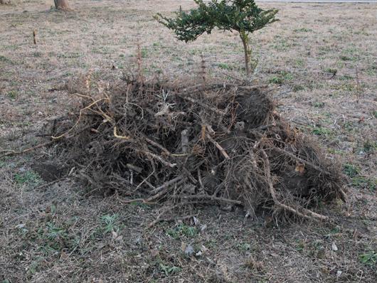竹根切り2_29
