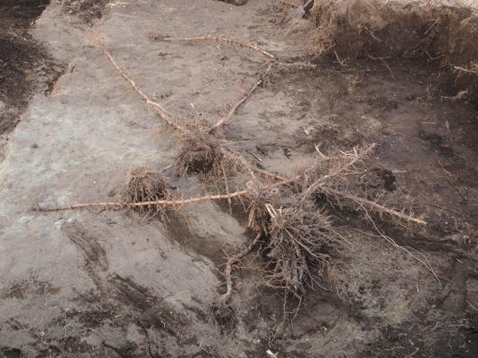 竹根切り5_3