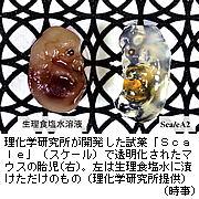 20110830at97t.jpg
