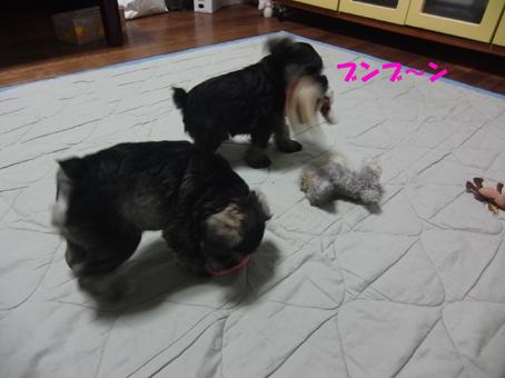 はなちゃん&ロコ