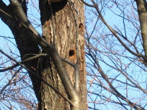 IMG_9267鳥の巣?