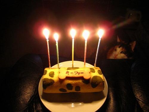 IMG_9319ケーキとちょこ