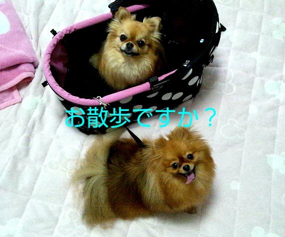 PhotoHenshu_20120505122359.jpg