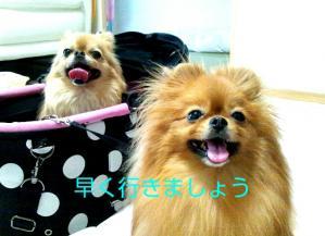 PhotoHenshu_20120505122610.jpg