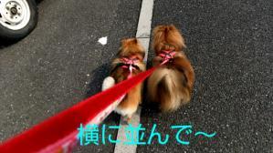 PhotoHenshu_20120506134941.jpg