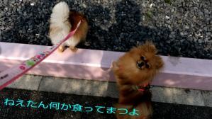 PhotoHenshu_20120506135316.jpg