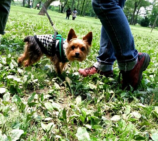 PhotoHenshu_20120510155902.jpg