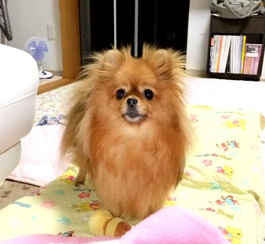 PhotoHenshu_20120513200051.jpg