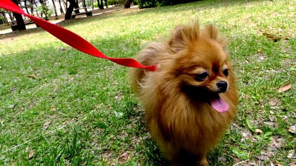 PhotoHenshu_20120517193716.jpg