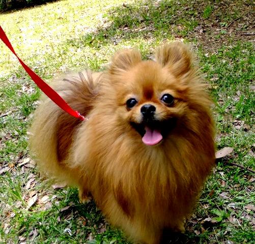 PhotoHenshu_20120517194111.jpg