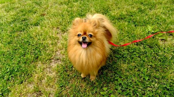 PhotoHenshu_20120517194447.jpg
