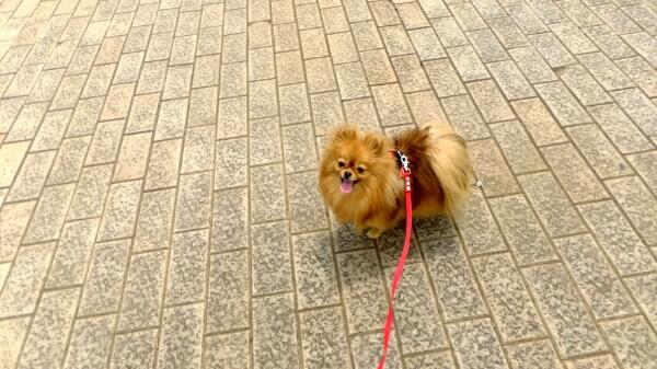 PhotoHenshu_20120517194648.jpg