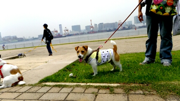 PhotoHenshu_20120517194749.jpg