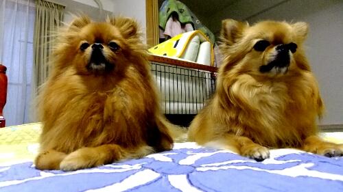 PhotoHenshu_20120521201134.jpg
