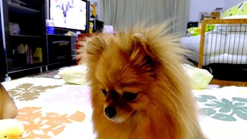 PhotoHenshu_20120521201220.jpg