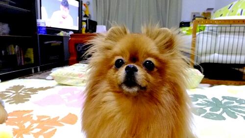 PhotoHenshu_20120521201239.jpg
