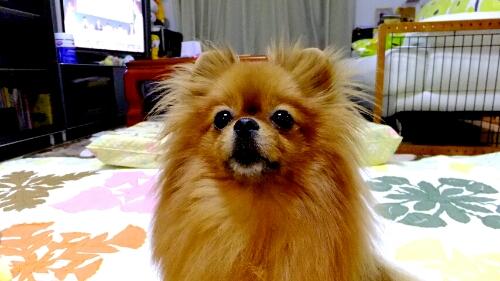 PhotoHenshu_20120521201308.jpg