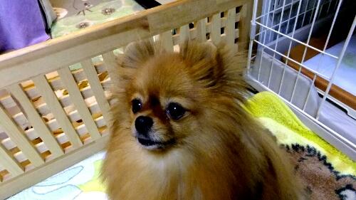 PhotoHenshu_20120521201348.jpg