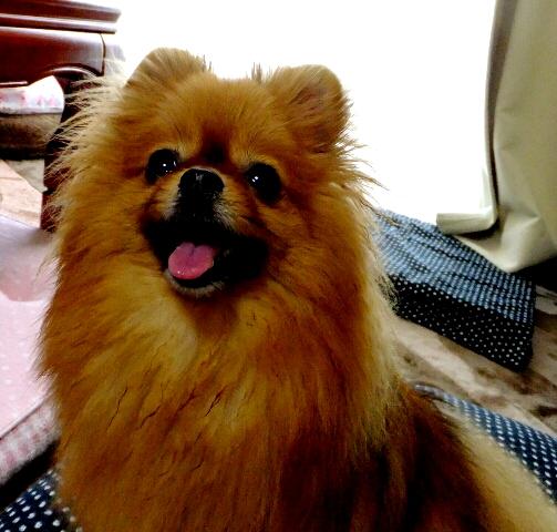PhotoHenshu_20120523185932.jpg