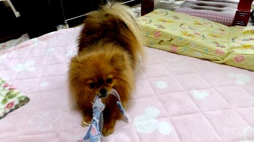 PhotoHenshu_20120530224958.jpg