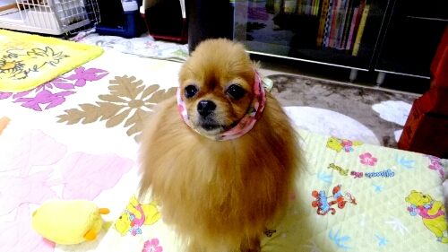 PhotoHenshu_20120604194601.jpg