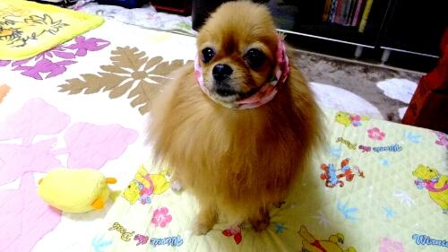 PhotoHenshu_20120604194622.jpg